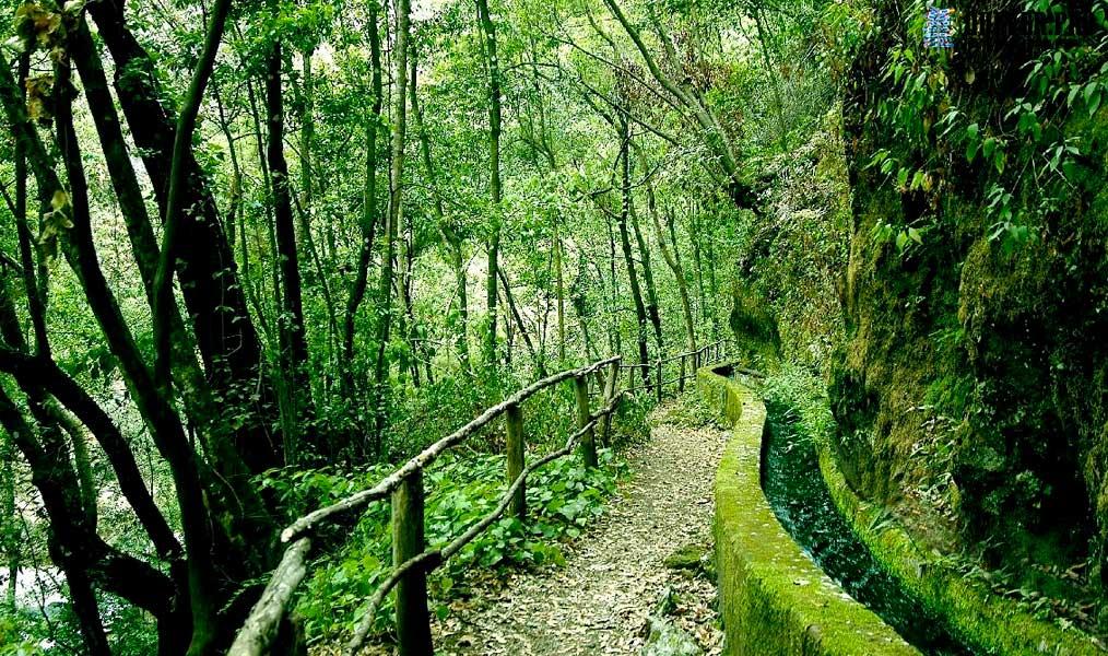 Bosque de los Tilos La Palma