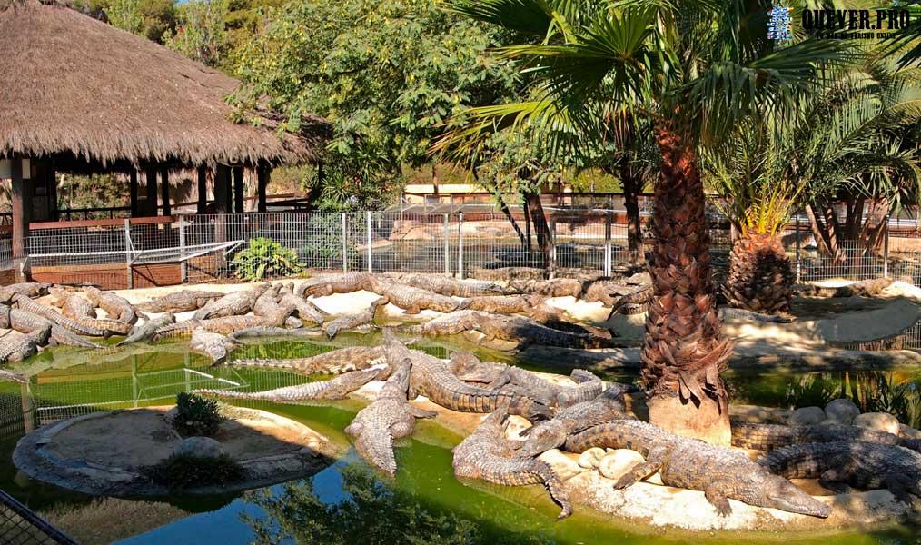 Cocodrile Park Torremolinos