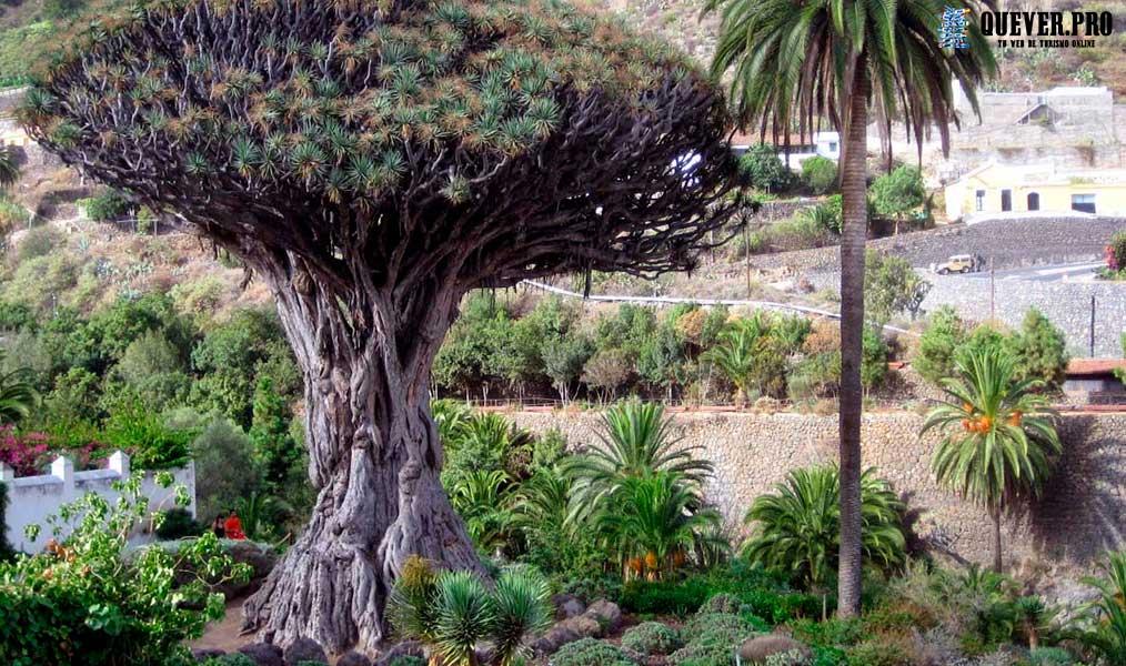 Icod de los Vinos Canarias