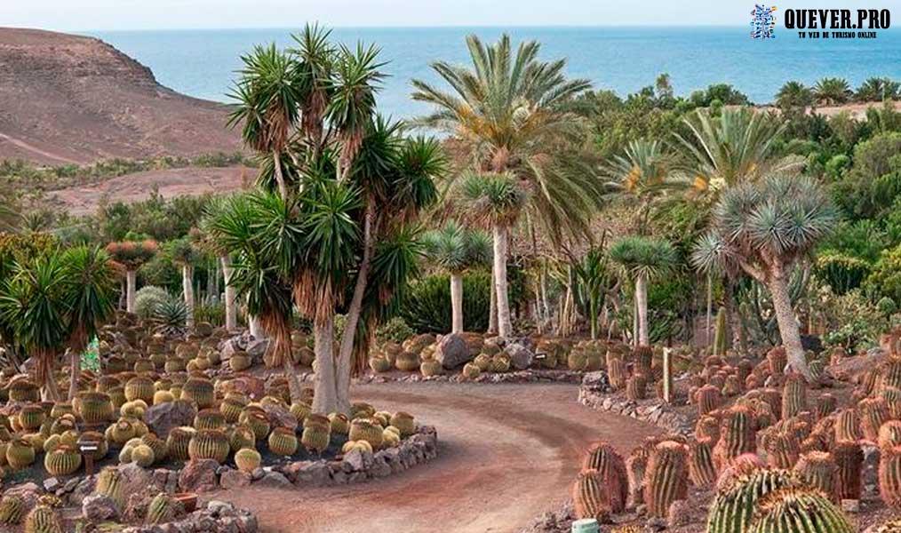 Jardín Botánico de Fuerteventura