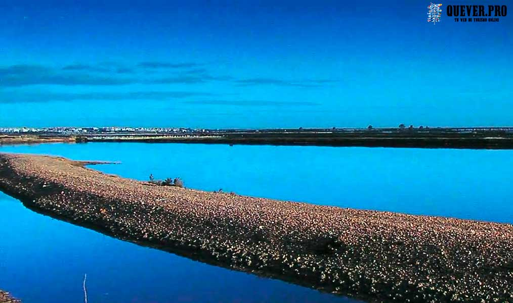 Marismas del Odiel Huelva