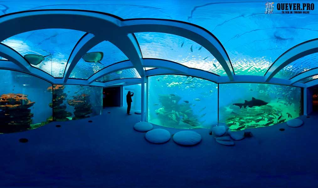 Palma Aquarium Palmas de mallorca