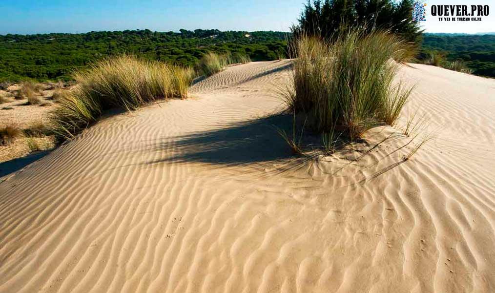 Parque Nacional de Doñana Andalucía