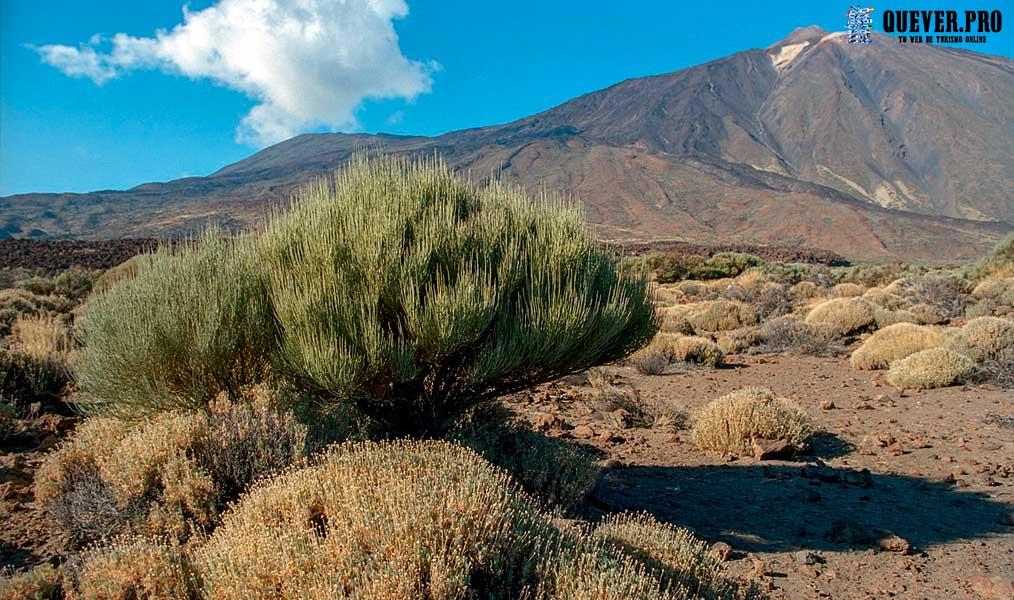 Parque Nacional del Teide Canarias