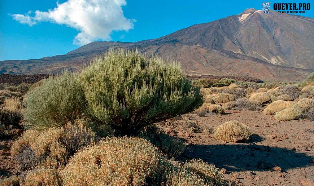 Parque Nacional del Teide Tenerife