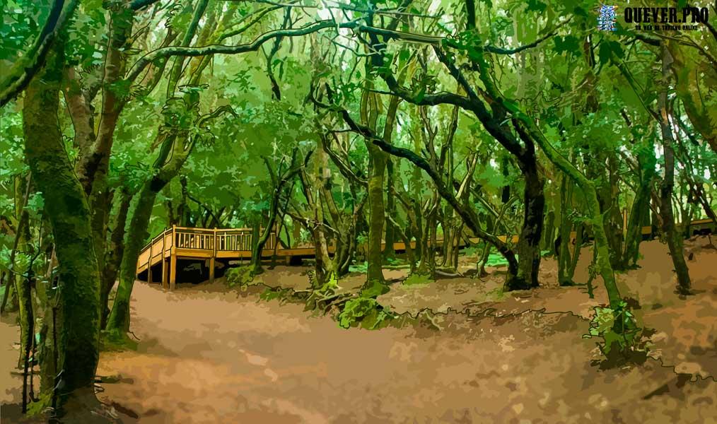 Parque Natural de Anaga Tenerife