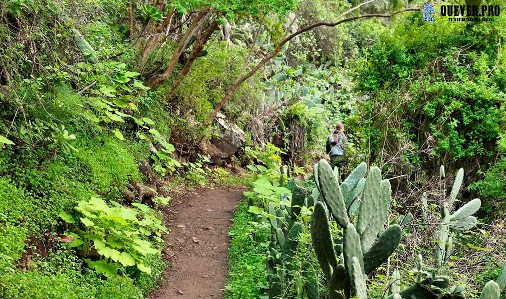 Reserva Natural Especial de los Tilos de Moya Gran Canaria