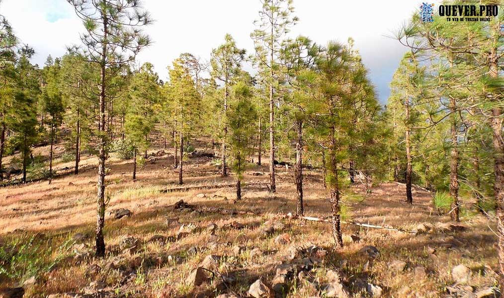 Reserva Natural de Inagua canaria