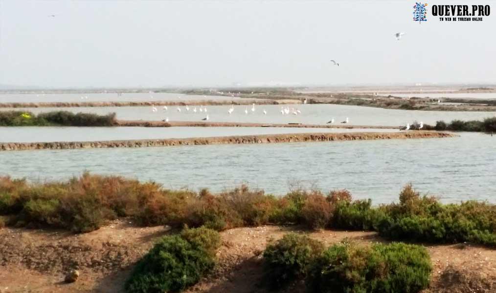 Salinas de la Tapa El Puerto de Santa María