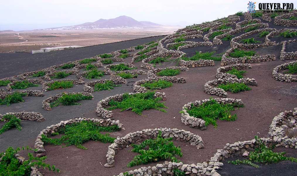 Viñedos de la Geria Lanzarote